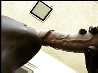 Black Chicks White Dicks  Porn
