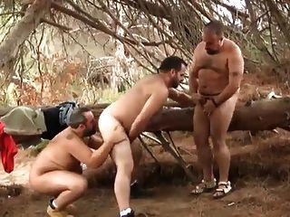 Osos De Espana (bears Of Spain)